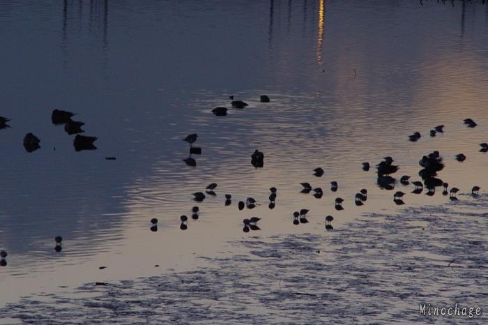 就寝前の鳥たち