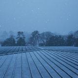 深々と降り続く雪(金沢)