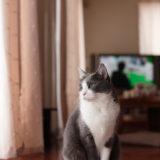 Canon EOS 6D 初ショット