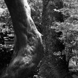 Leica M3と竜安寺で