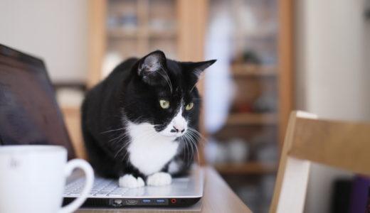 京町家購入体験記(2) - ペット可の賃貸が、なかなか見つからない。