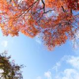 秋の京都でお散歩 (仁和寺)