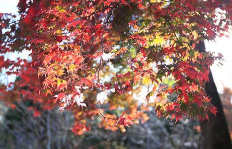 秋の京都でお散歩 (仁和寺2)
