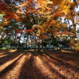 秋の京都でお散歩(京都御苑)