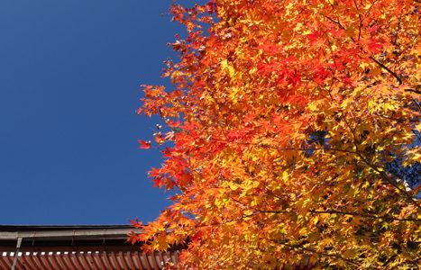 紅葉の京都を散策