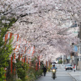 京都: 初めての春 (1)