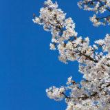 京都: 初めての春 (2)