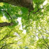 京都: 初めての春 (4)