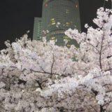 名古屋駅前の夜桜