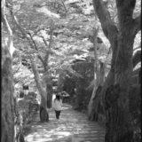 京都の初夏に