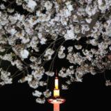 夜桜 (京都 2018)