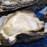 日生のプリプリ牡蠣