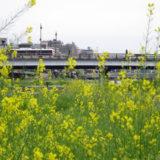 爽やかな京都の春