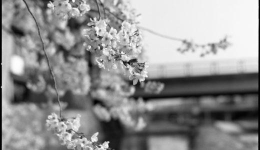 '19年春 Hasselblad 503CXと(1)